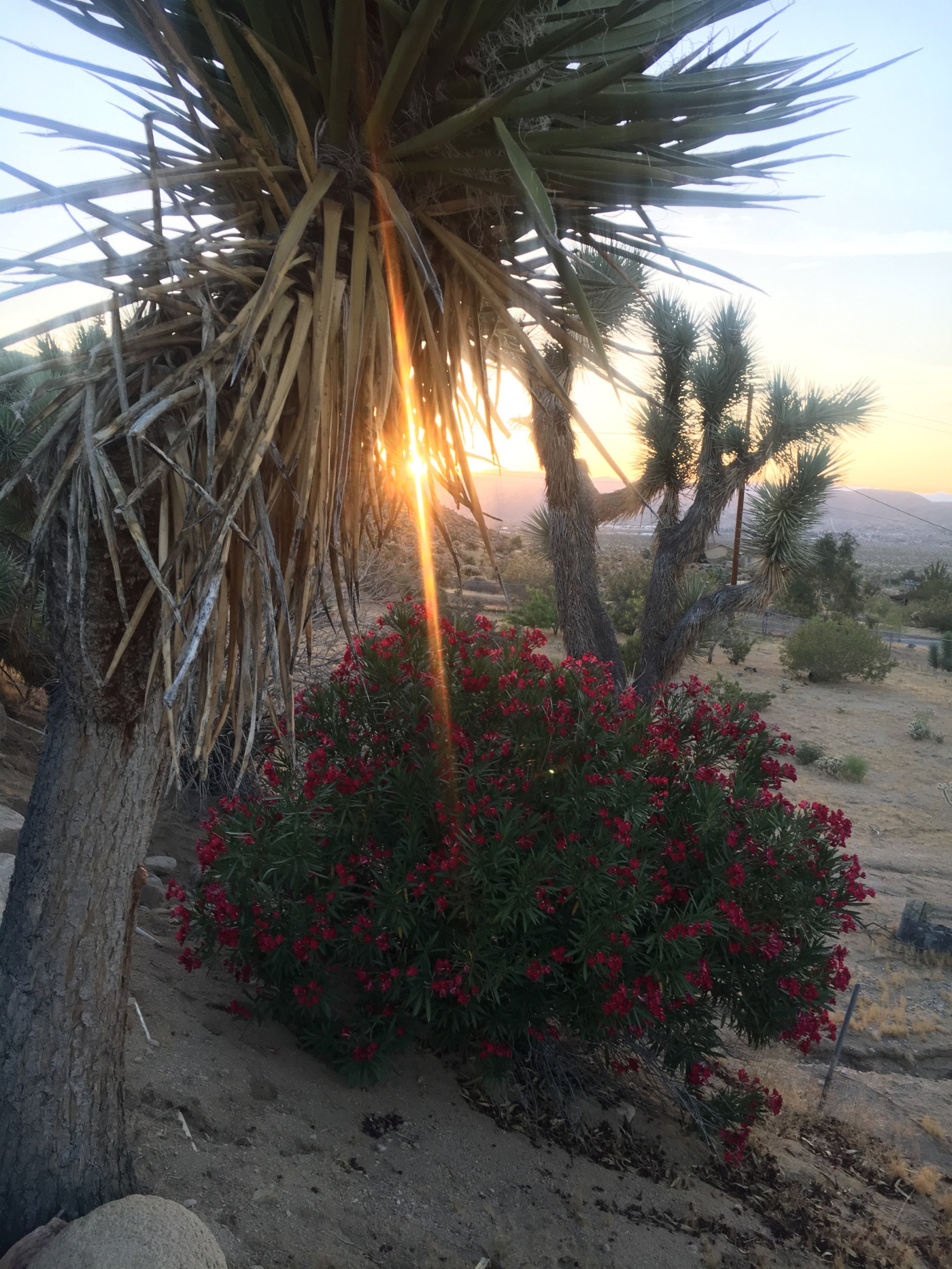 Laurie Markvart, writing about kids, family, and life from Joshua Tree, CA